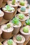 Variety Of Cactus. Royalty Free Stock Photos