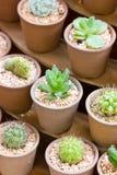 Variety Of Cactus. Stock Image
