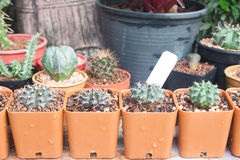 The variety of cactus pot plant Royalty Free Stock Photography