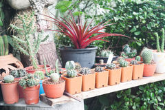 The variety of cactus pot plant Stock Photo