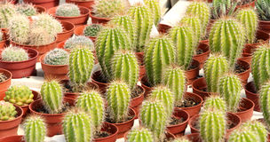 Variety of cactus and succulents Royalty Free Stock Image
