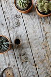 Variety of cactuses framing space on used wooden cable drum Stock Image
