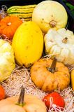 Variety of colorful autumn pumpkins on the market Stock Images