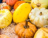 Variety of colorful autumn pumpkins on the market Stock Photography