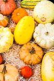 Variety of colorful autumn pumpkins on the market Stock Image