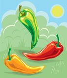 Three hot peppers on a sunny meadowpepper 1. A variety of colorful chili peppers on a vegetable background vector illustration