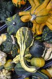 Gourds. A variety of colorful decorative gourds at the farm market in autumn stock photos