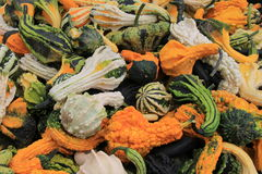 Variety of colorful Fall gourds on table at farmers market royalty free stock photos