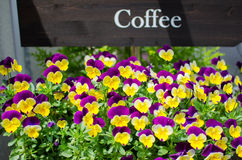 Variety of colorful flowers in flower shop Stock Image