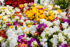 Variety of colorful freesias, floral background Royalty Free Stock Photo