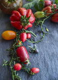 Variety, colorful and fresh tomatoes on a branch with leaves on a dark background, close-up. Variety, colorful and fresh tomatoes on a branch with leaves on dark royalty free stock photo