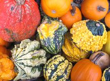 Variety of colorful gourds Stock Images
