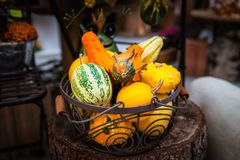 Colorful ornamental pumpkins, gourds and squashes in the market Royalty Free Stock Images