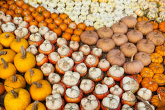 Variety of colorful pumpkins. Decorative Stock Image