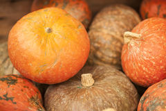 Variety of colorful pumpkins Royalty Free Stock Images