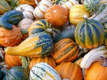 Variety of Colorful Pumpkins II Stock Photos