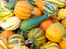 Variety of Colorful Pumpkins Royalty Free Stock Image