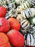 Variety of colorful squashes Royalty Free Stock Image