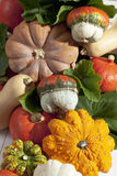 Variety of colorful squashes, background Royalty Free Stock Image