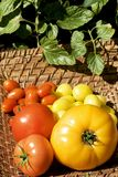 Variety Colorful Tomatoes Royalty Free Stock Photography