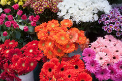 Variety of colourful bouquets of flowers. Some bunches of different varieties of colourful flowers on display in a florist shop Stock Images