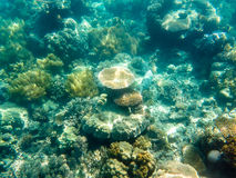 Variety of Coral at the Great Barrier Reef. Coral growing underwater at the Great Barrier Reef in Australia Stock Photos