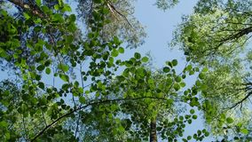 Variety crowns of the trees in the spring forest against the blue sky with the sun. stock footage
