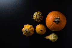 Variety of decorative pumpkins Stock Photography