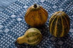 Variety of decorative pumpkins Stock Photos