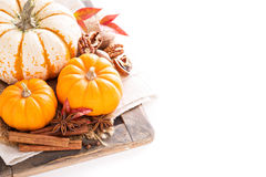 Variety of decorative pumpkins on white background Stock Photography
