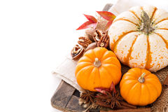 Variety of decorative pumpkins on white background Royalty Free Stock Images