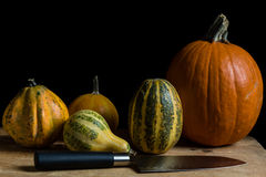 Variety of decorative pumpkins Royalty Free Stock Images