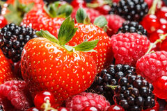 Variety of different berries Stock Image