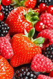 Variety of different berries Stock Images