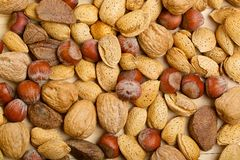 Variety of different nuts as a background Stock Image