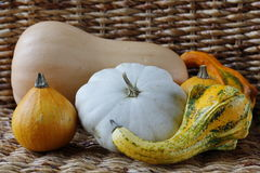 Variety of different pumpkins in a wicker background Stock Images