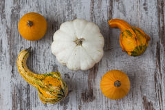 Variety of different pumpkins in a wood background Stock Photography