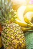 Variety of Different Tropical and Summer Fruits. Pineapple Mango Coconut Citrus Oranges Lemons Apples Kiwi Bananas on Palm Leaf. Variety of Different Tropical royalty free stock photo