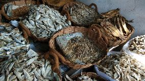 Variety of Dry Fish. In one pic stock photography