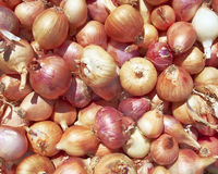 Variety of dry onions Royalty Free Stock Photo