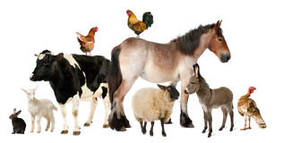 Variety of farm animals. In front of white background Stock Photography