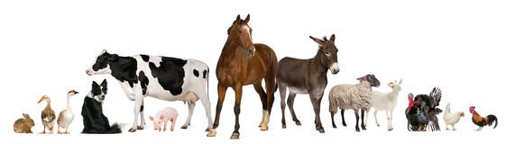 Variety of farm animals. In front of white background Royalty Free Stock Images