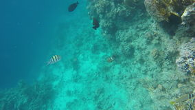A variety of fish in the clear water of the Red Sea. Slow Motion, 120 fps stock video