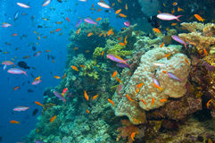Variety of of fish and coral