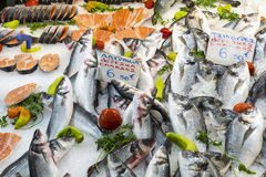 Variety of fish and seafood on local greece market. Royalty Free Stock Photos