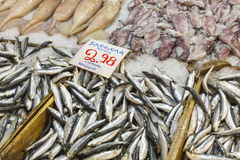 Variety of fish and seafood on local greece market. Stock Image