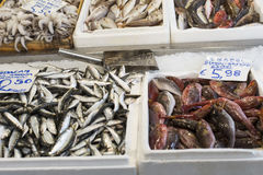 Variety of fish and seafood on local greece market. Royalty Free Stock Photography