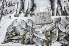 Variety of fish and seafood on local greece market. Royalty Free Stock Images