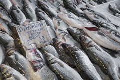 Variety of fish and seafood on local greece market. Royalty Free Stock Photo