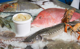 Variety of fish and seafood on market ice display. Great variety of fish and seafood on fish market ice display royalty free stock photo